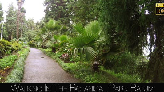 Thumbnail for Botanical Park In Batumi 12