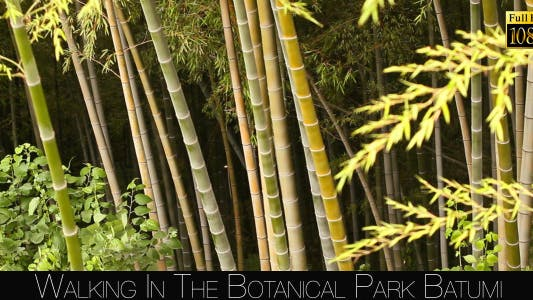 Thumbnail for Botanical Park In Batumi 13