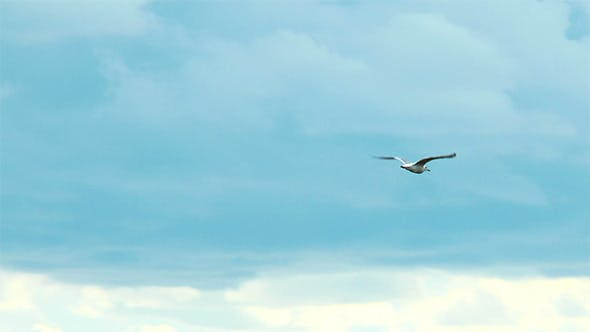 Thumbnail for Seagull in the Sky