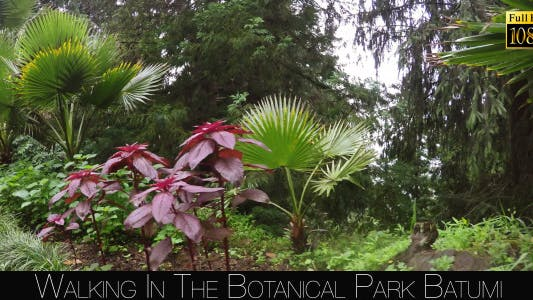 Cover Image for Botanical Park In Batumi 14