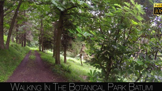 Thumbnail for Botanical Park In Batumi 15