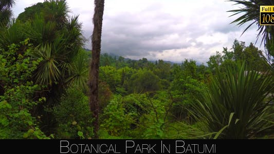 Cover Image for Botanical Park In Batumi 16