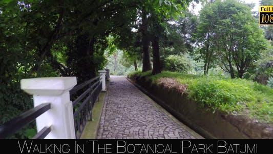Thumbnail for Botanical Park In Batumi 23