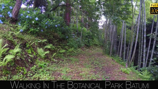 Thumbnail for Botanical Park In Batumi 24