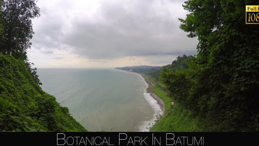 Cover Image for Botanical Park In Batumi 25