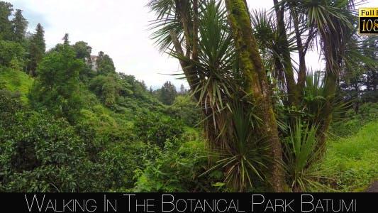 Thumbnail for Botanical Park In Batumi 26
