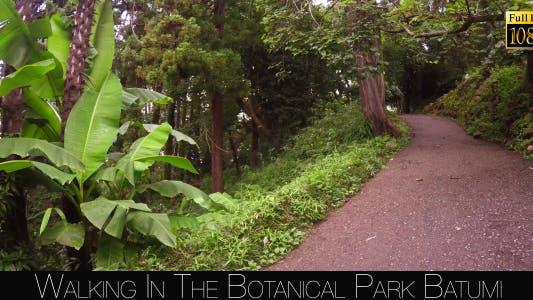 Thumbnail for Botanical Park In Batumi 28