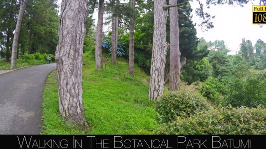 Botanical Park In Batumi 29