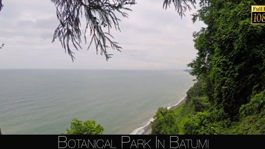 Botanical Park In Batumi 32