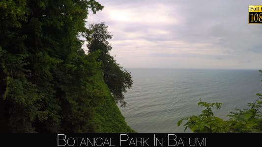 Cover Image for Botanical Park In Batumi 38