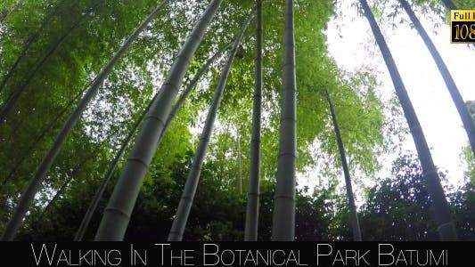 Thumbnail for Botanical Park In Batumi 40