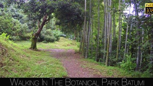 Thumbnail for Botanical Park In Batumi 41