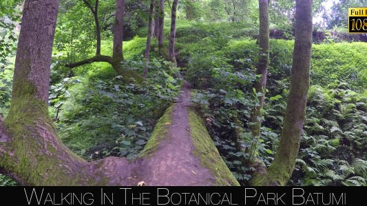Thumbnail for Botanical Park In Batumi 45