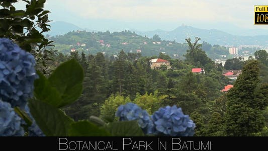Cover Image for Botanical Park In Batumi 53