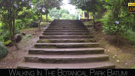 Cover Image for Botanical Park In Batumi 55