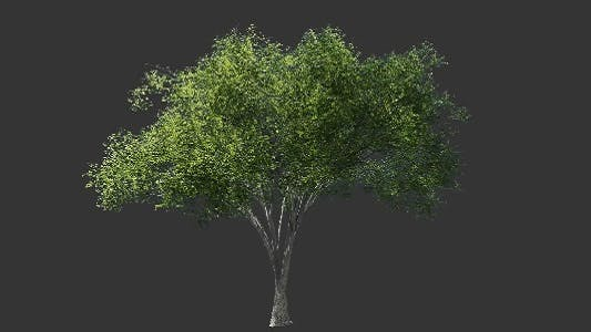 Thumbnail for Tree Collection 1