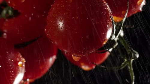Cherry Tomatoes with Water Splash at a Dark Background