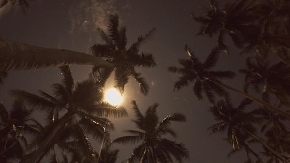 Thumbnail for Beach At Night With a Full Moon And Coconut Palms