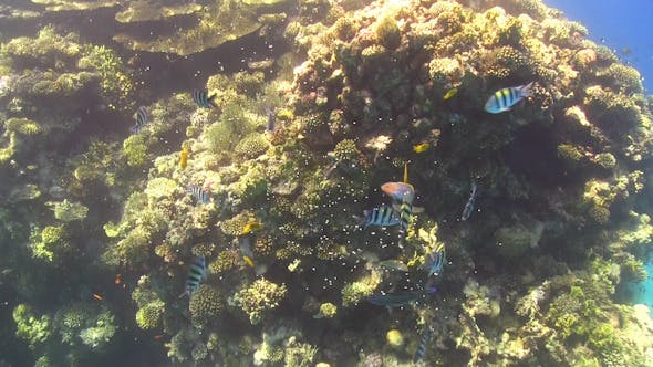 Thumbnail for Tropical Fish Feeding on Vibrant Coral Reef