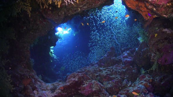 Thumbnail for Sunlight Illuminates a Underwater Cave