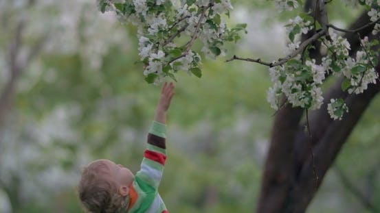 Thumbnail for Child Trying To Get Branch Of Blooming Tree