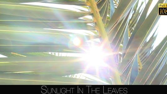 Thumbnail for Sunlight In The Leaves 73