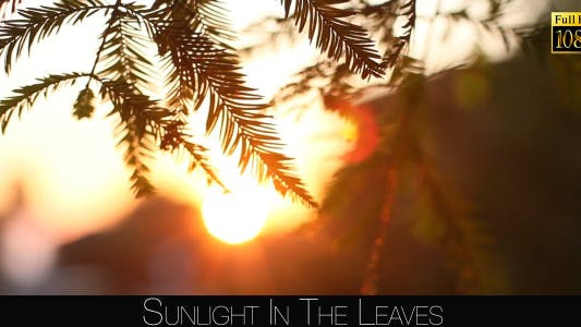 Cover Image for Sunlight In The Leaves 74