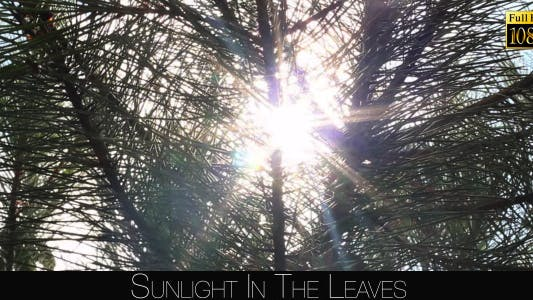Thumbnail for Sunlight In The Leaves 75