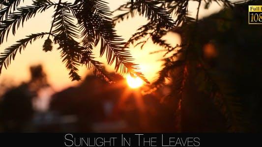 Thumbnail for Sunlight In The Leaves 77