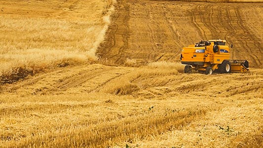 Cover Image for Wheat Field