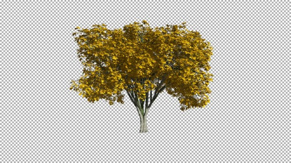 Thumbnail for Tree On The Wind Isolated 1 (Gentle Wind)