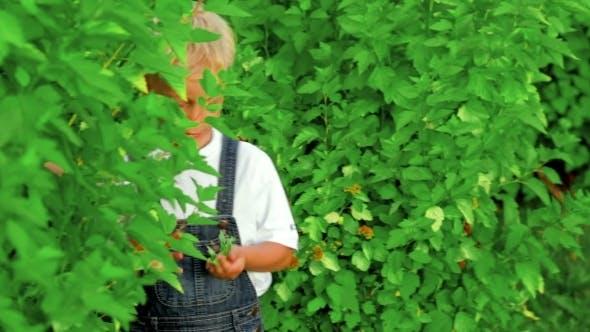 Thumbnail for Happy Little Boy Hiding In Bushes