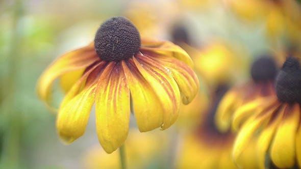 Thumbnail for August Flower 1