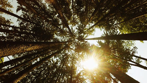 Thumbnail for Sunshine Through the Trees