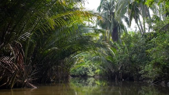 Thumbnail for Palm Tree Tropical Forest In Backwater - Boat Trip