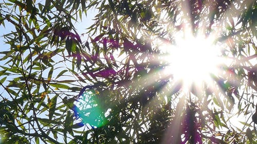 Bright Sun Shines Through Tree Foliage