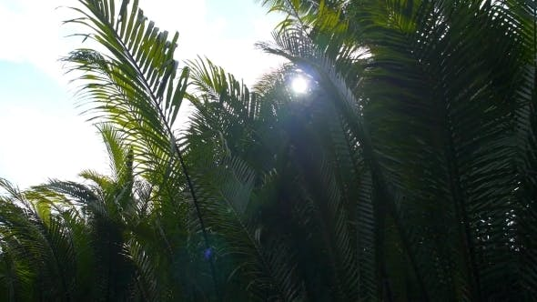 Thumbnail for Green Leaves In Tropical Jungle Forest With Sun