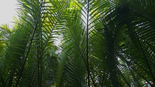 Thumbnail for Tropical Rain Forest With Green Leaves Of Palms
