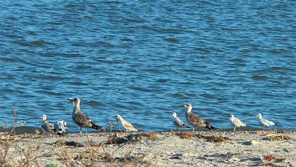 Thumbnail for Gulls on the Beach