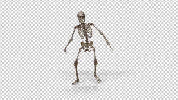 Skeleton Pack
