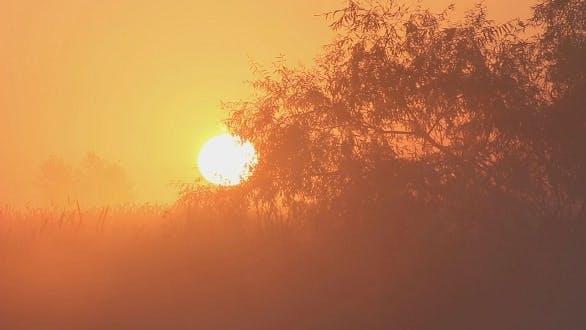 Thumbnail for Morning Sun