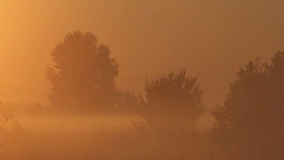 Thumbnail for Morgen Nebel auf dem Fluss 4