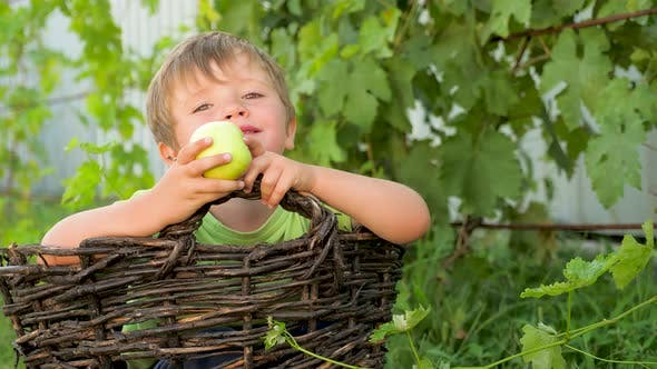 Thumbnail for Summer holidays concept. Harvesting concept. Boy in the basket eating apple. Happy childhood