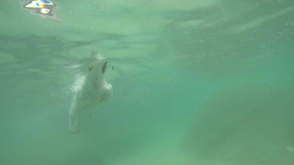 Thumbnail for Cute Dog Jack Russel Terrier Swim In Sea