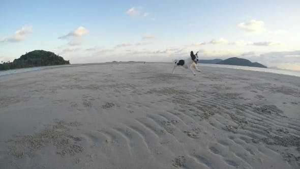 Thumbnail for Dogs Playing And Running At The Beach. Slow Motion