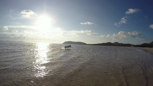 Thumbnail for Happy Dog Running On The Beach In The Sea