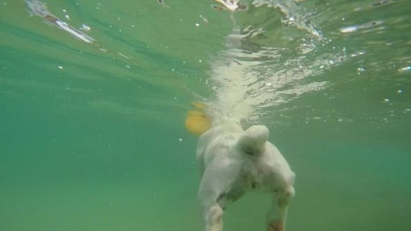 Thumbnail for Puppy Swimming Underwater In The Sea