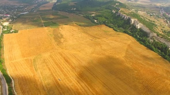 Thumbnail for Aerial View Of Yellow Agricultural Field