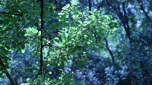 Green Leaf In Nature 685