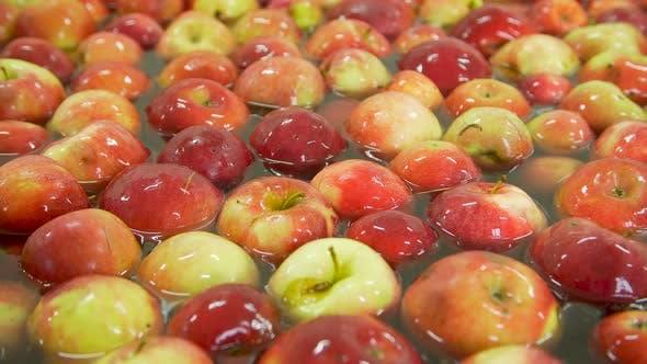 Washing Apples on the Conveyor